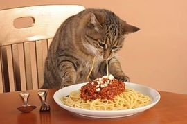 kat-spaghetti