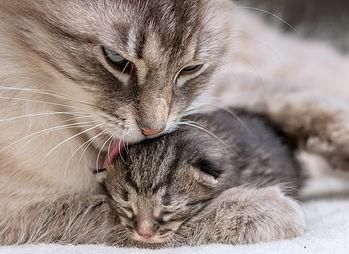 katten-algemeen
