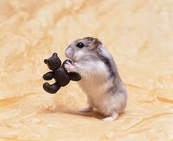 hamster-beer