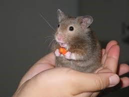 hamster-hand