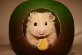 hamster-voeding