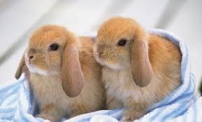 jonge-konijnen