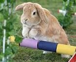 konijn-beweging