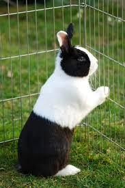 konijn-hek