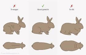 konijn-voeding