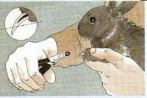 konijnen-nagels