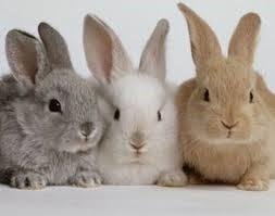 konijnen-website