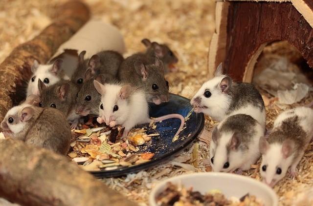 muizen-eten