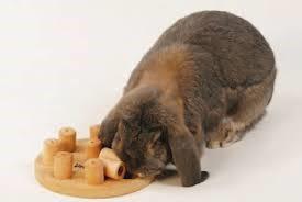 voeding-konijnen