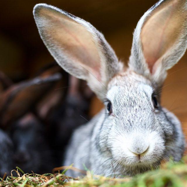 Kunnen konijnen tijdens de koude wintermaanden buiten blijven?