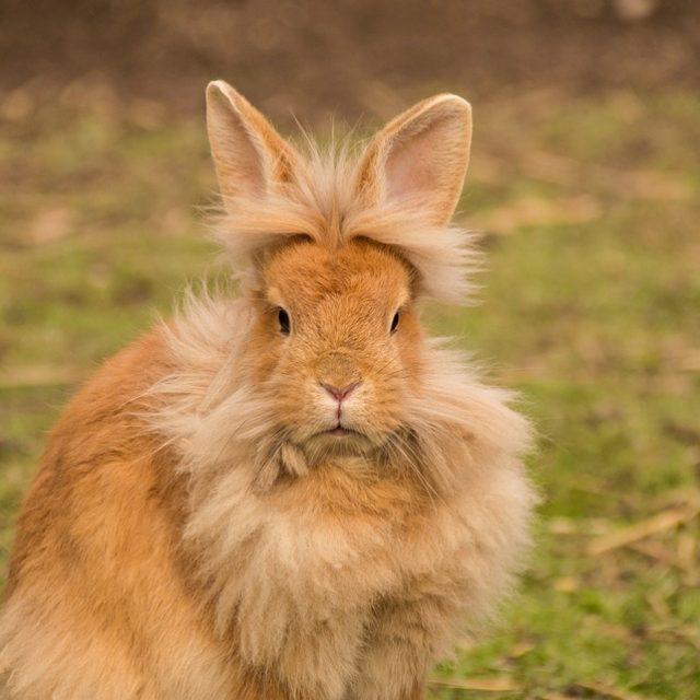 De lichaamstaal van een konijn