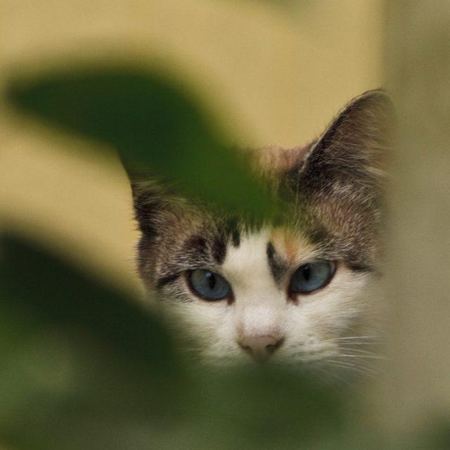 Insectenbeet bij katten