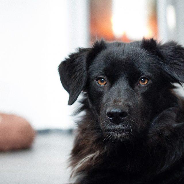 Honden en alleen zijn