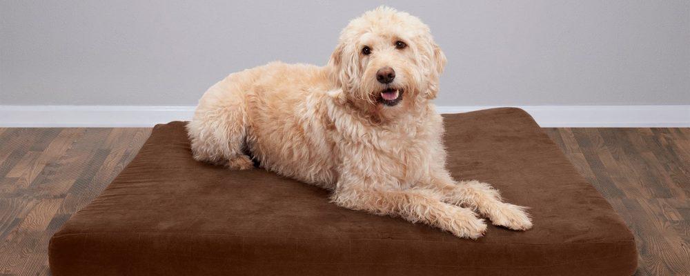 Orthopedische kussens voor honden