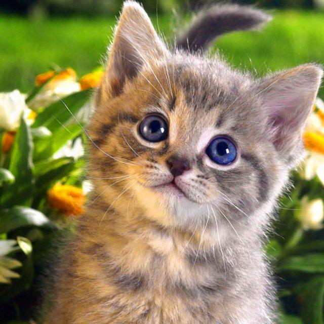 Blaasgruis bij katten