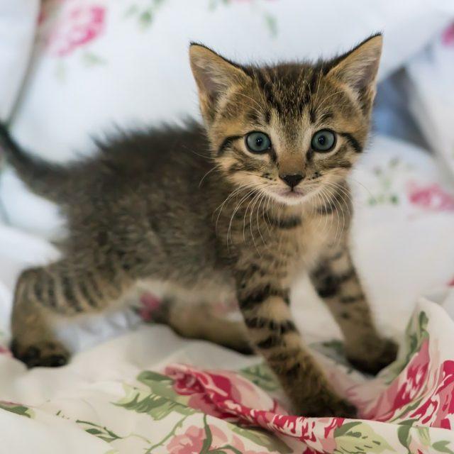 Jippie je kitten mag mee naar huis