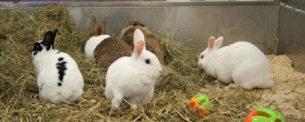 Een konijn is een groepsdier