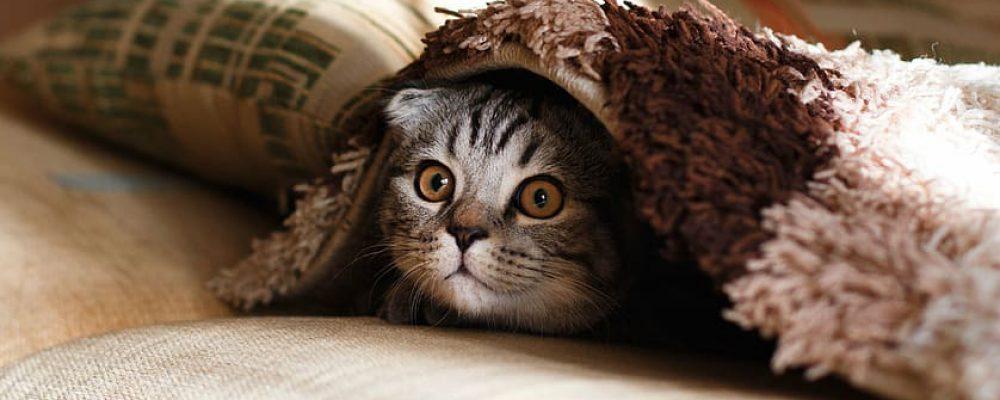 Gun je kat een fijne en vooral veilige jaarwisseling
