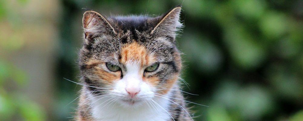 Artrose bij oudere katten