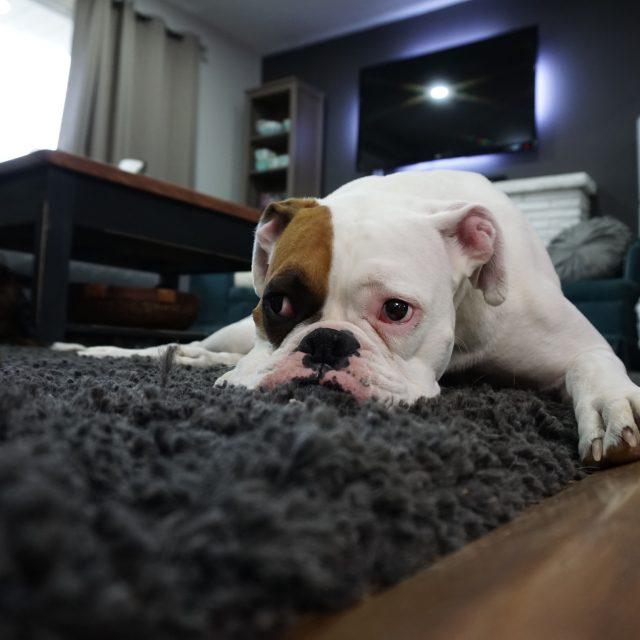 Heeft uw hond last van pijnlijke gewrichten??