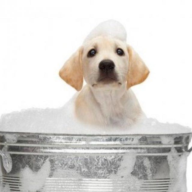 Je hond wel of niet wassen