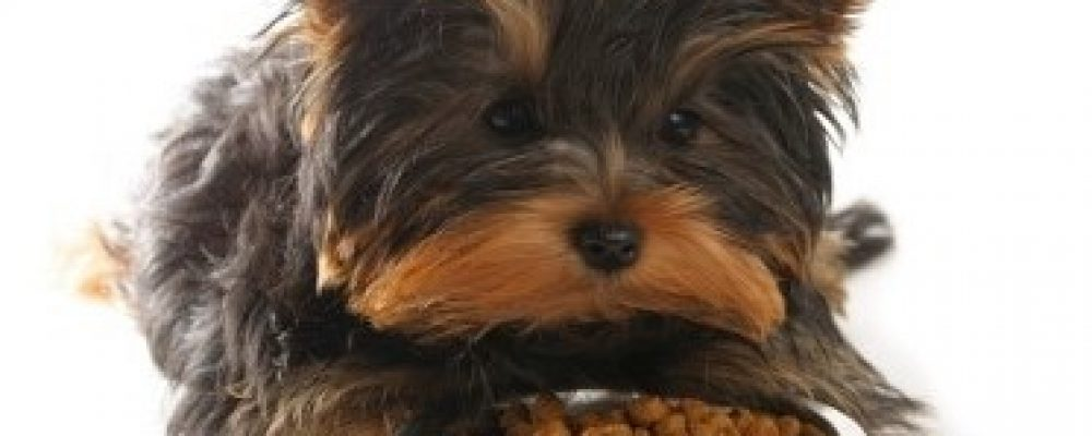 Waarom een graanvrije voeding voor je hond of kat?