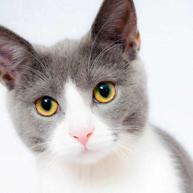 Haarballen bij katten