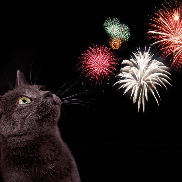 Vuurwerk en katten