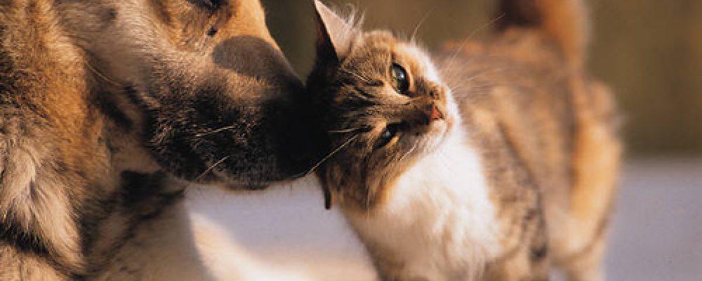 Waarom moet ik mijn hond en kat ontwormen?