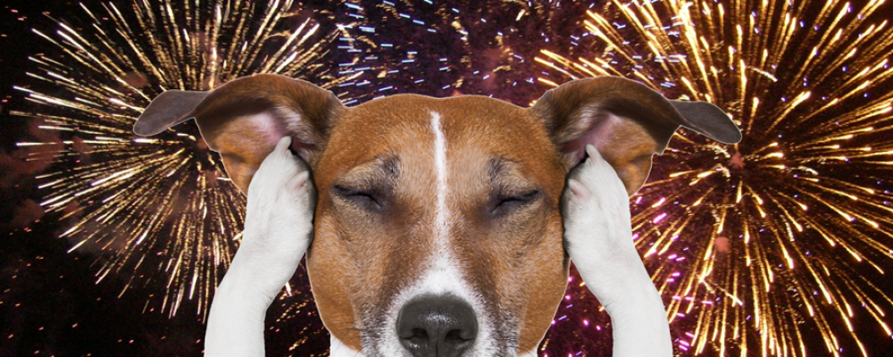 Vuurwerk en honden