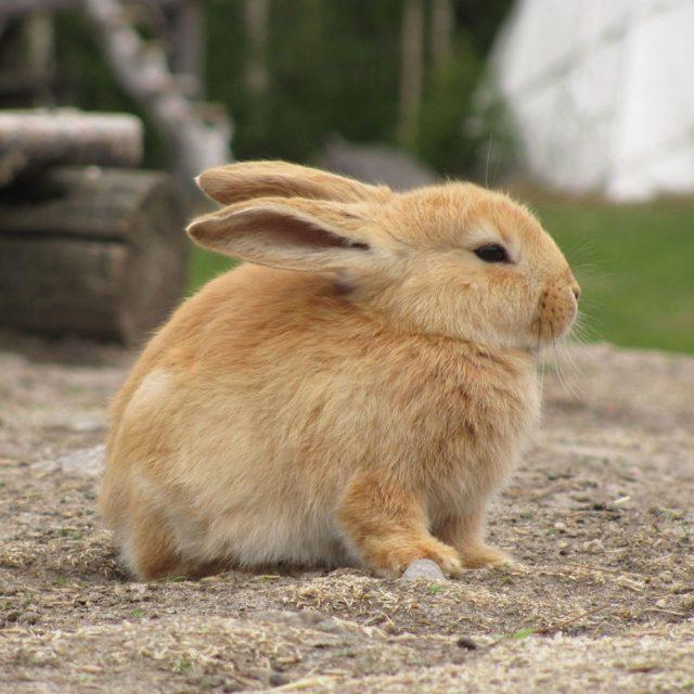 Kun je een konijn zindelijk maken?