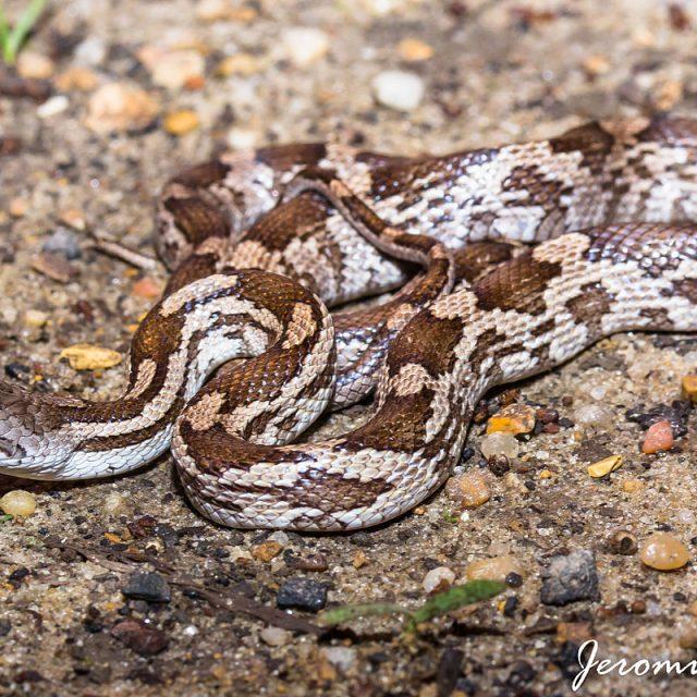 Help ik heb een slang gevonden!!