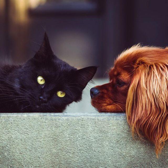 Hoe vaak moet je een kat of hond ontwormen?