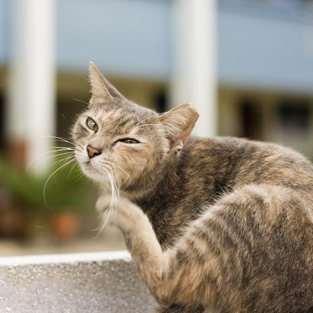 De kat krabt de krullen van de trap