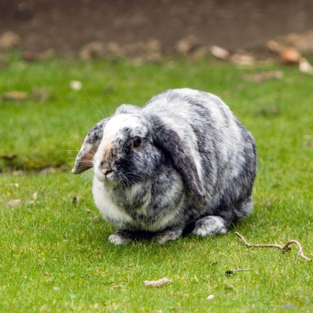 Ieder pondje gaat door het konijnenmondje