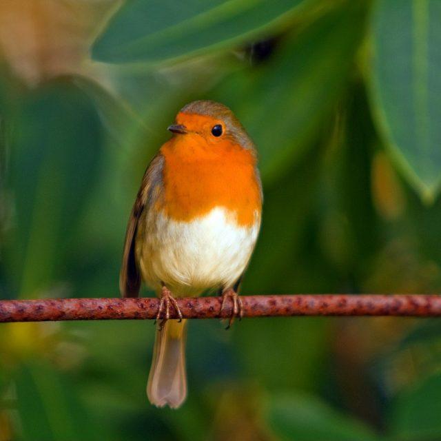 Wat voeren we de buitenvogels in de winter?