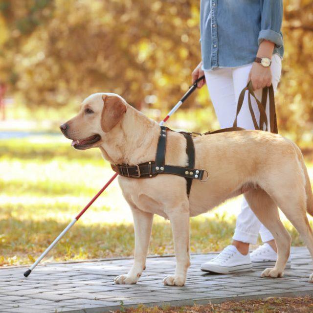 Internationale dag van de blindengeleide hond
