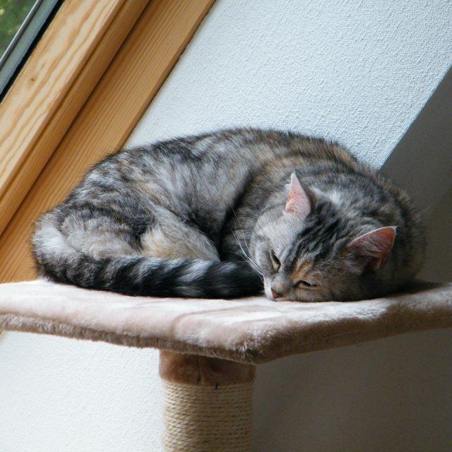 Hoe maak je jouw huis katvriendelijk?
