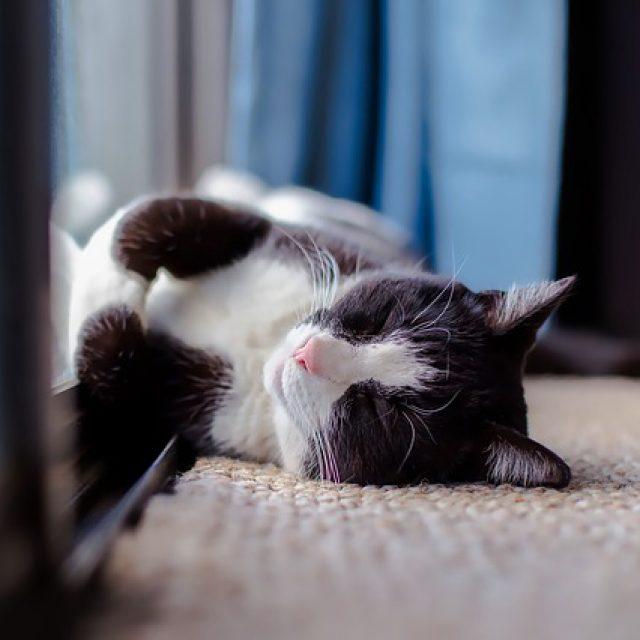 Fabels over het ontwormen van onze honden en katten
