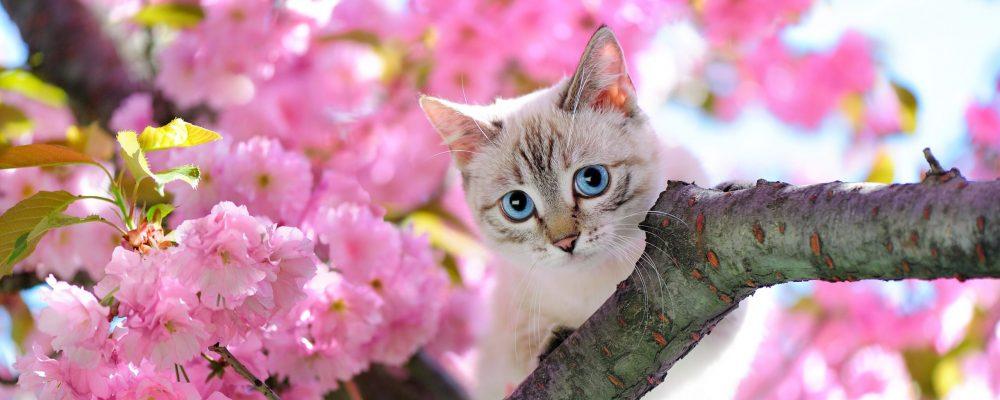 De gevaren voor een kat die buiten komt
