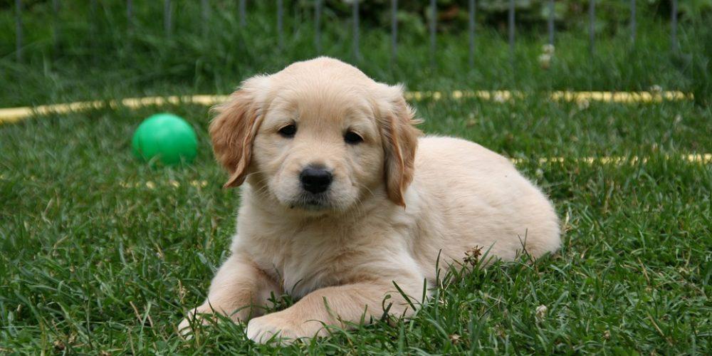 Hoe maak je een pup zindelijk?