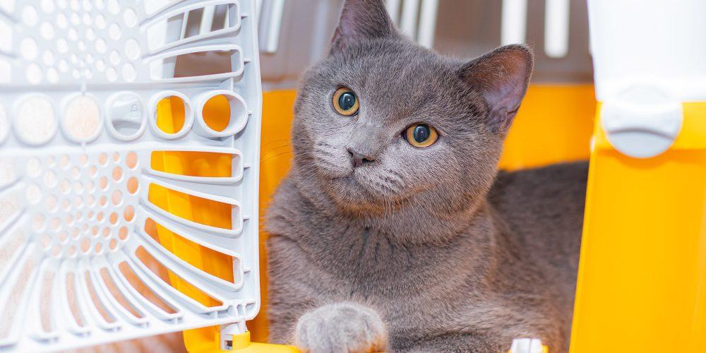 Ervaart jouw kat veel stress in een vervoersmand?