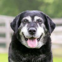 Waarom moet een oudere hond seniorenvoeding krijgen?
