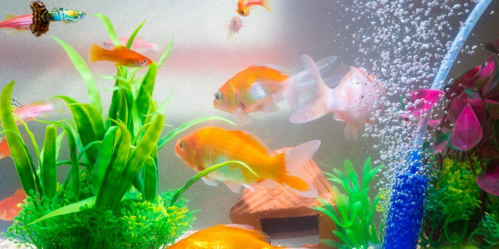 Kunnen vissen verdrinken?