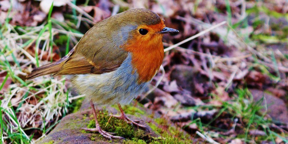 Wat voeren we de buitenvogels in de herfst?