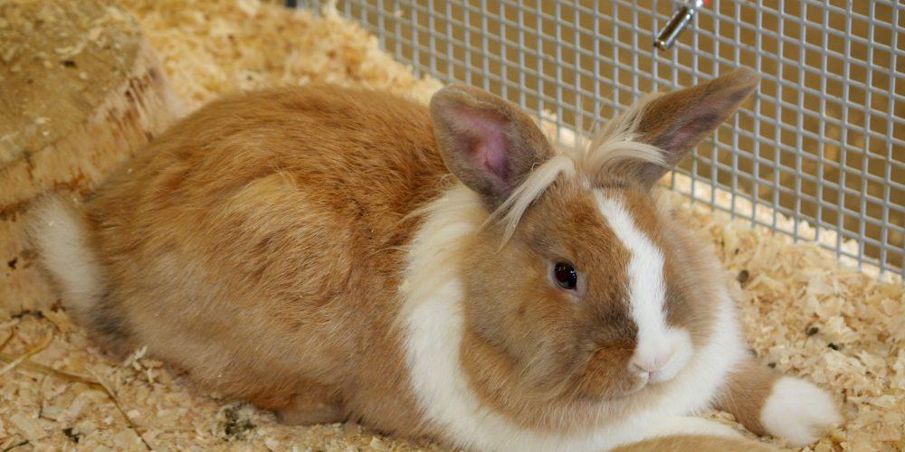 Het konijnenleed dat madenziekte heet