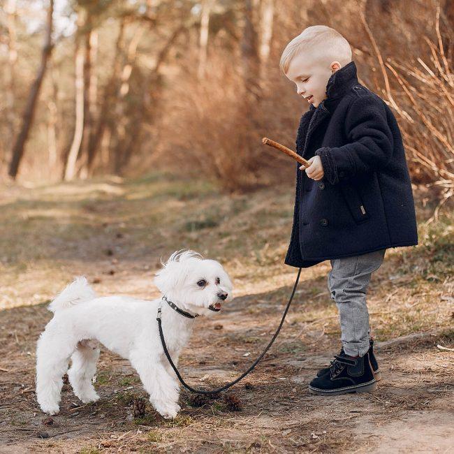 Hoe kindvriendelijk is jouw hond?
