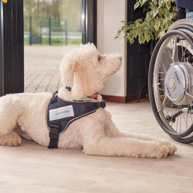 Pets&Co steunt Hulphond Nederland
