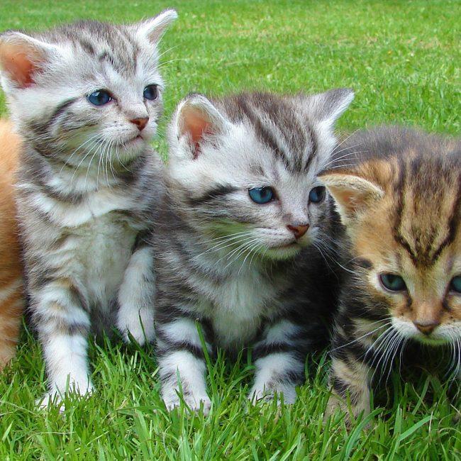 Hoera, we mogen een kitten!