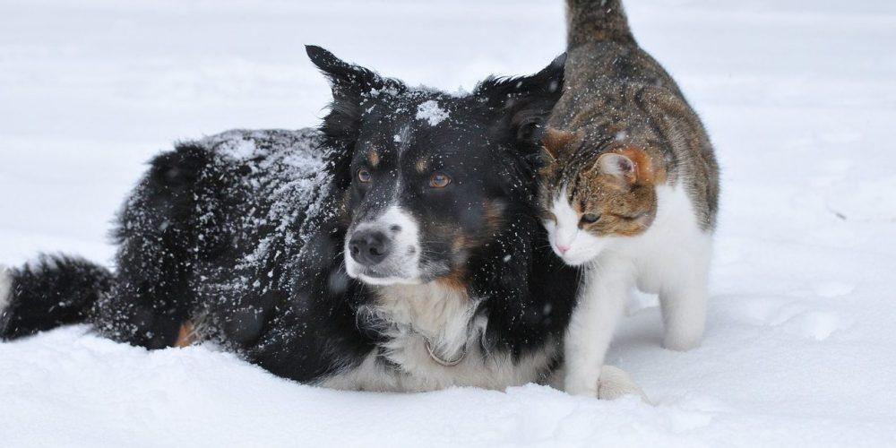 Moet ik mijn hond en/of kat ook in de winter ontvlooien?